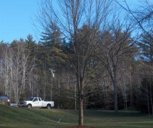 Large Landscaped Yard, Cambi Residence, Landscape Design Western MA, Landscape Design Longmeadow MA, Landscape Design West Springfield MA